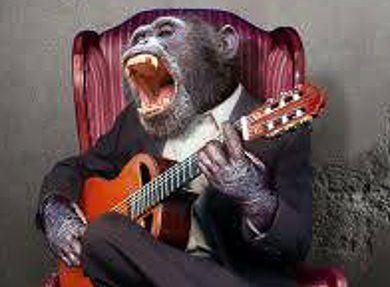 Chimpanzee playing guitar